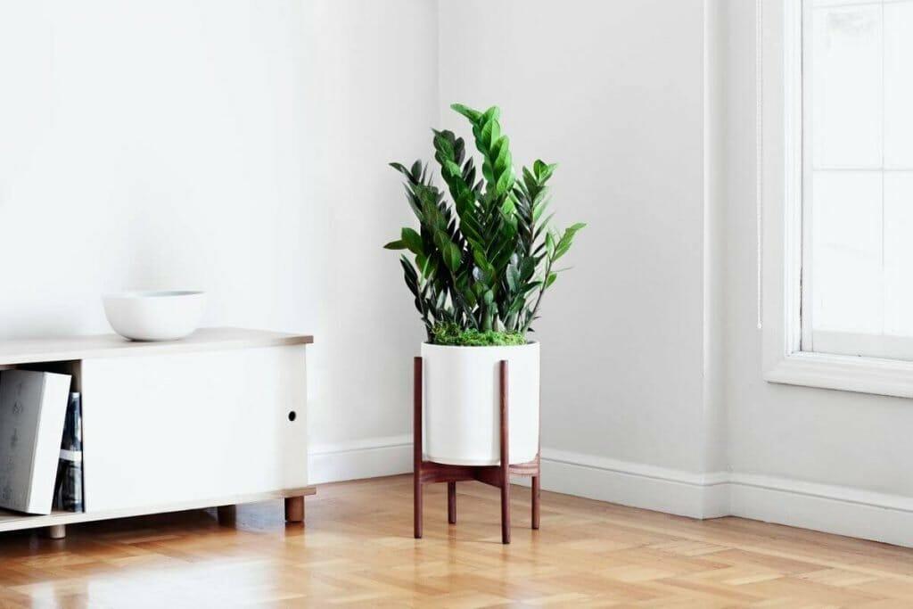 Benefits of ZZ Plants Leon and George