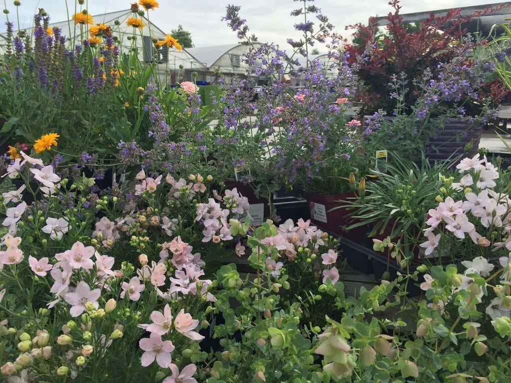 Echter's Garden Center and Plant Nursery in Denver, Colorado