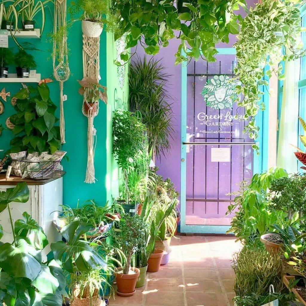 Green Lady Gardens Plant Shop in Denver Colorado