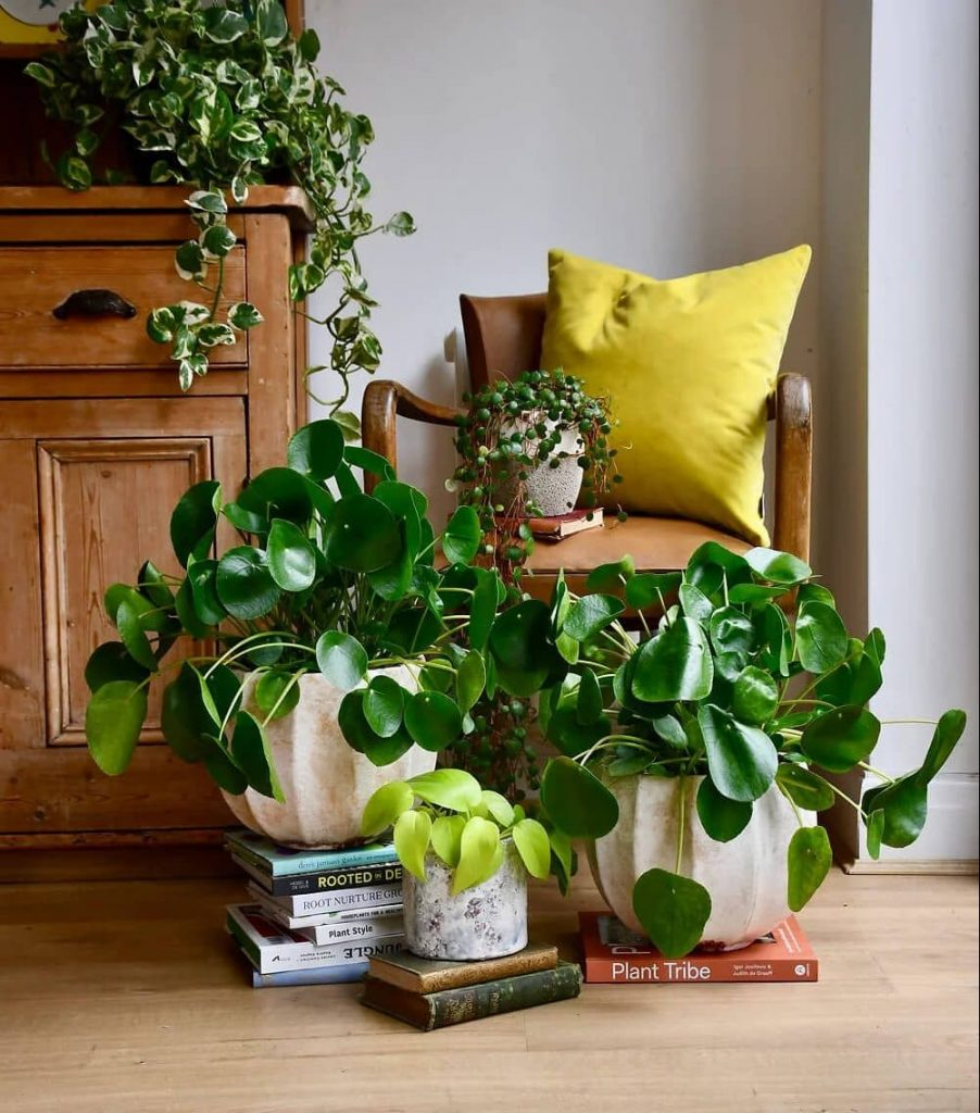 Happy-House-Plants-London-Plant-Delivery