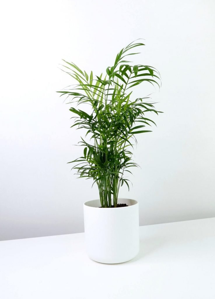 House of Kato London Plant Delivery