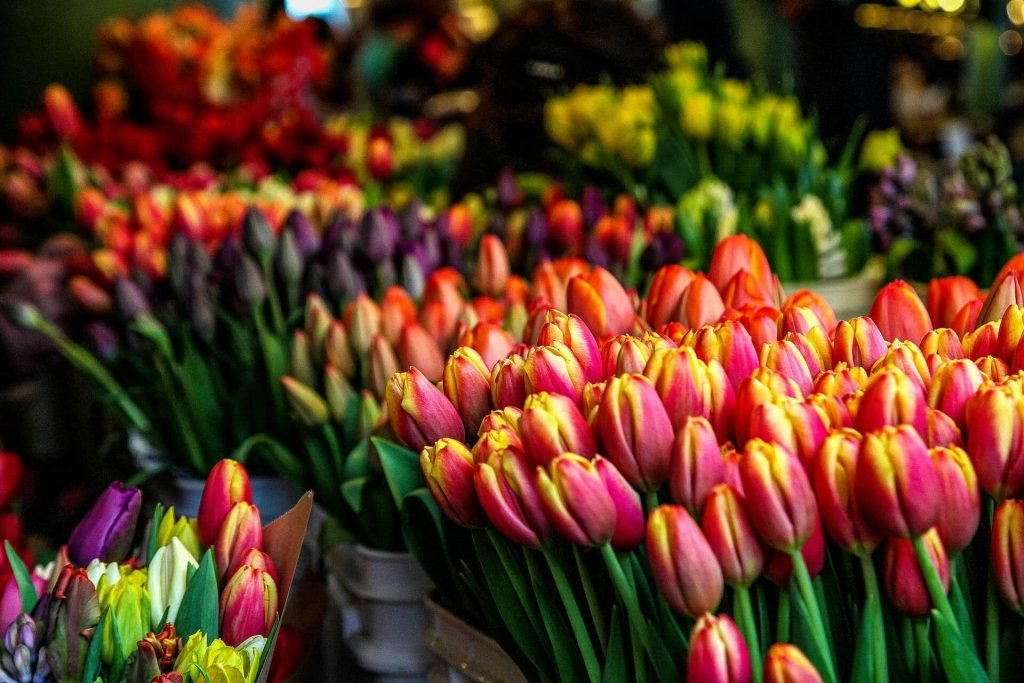 How to Care For Tulip Flowers