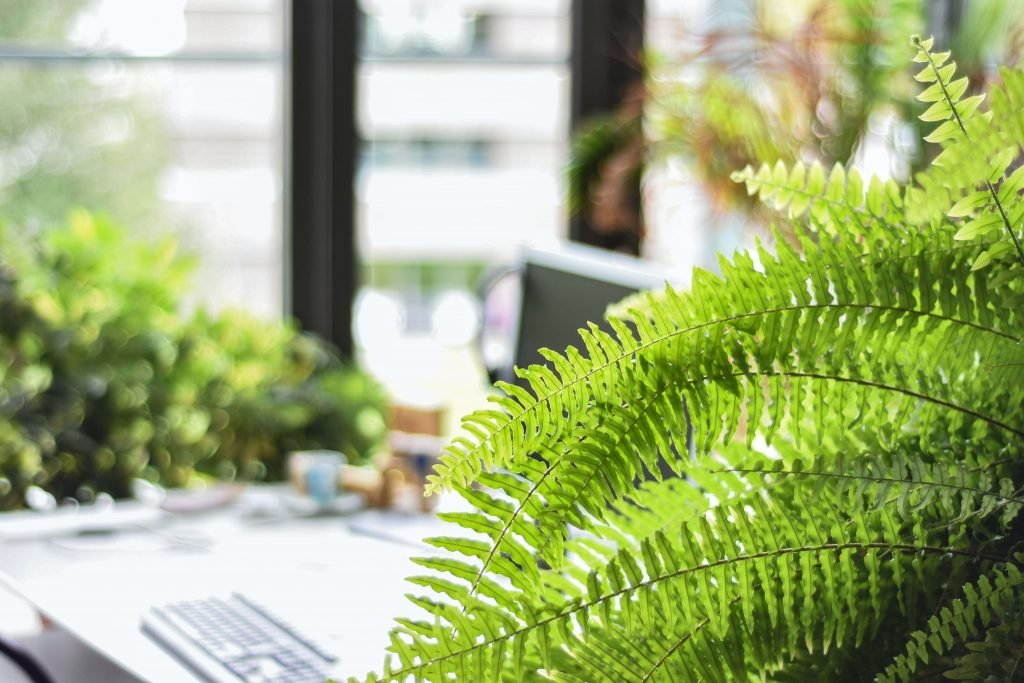 How to Care For Indoor Ferns