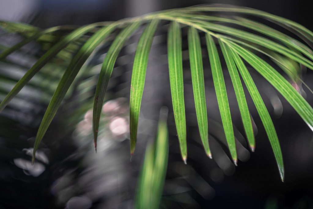 Indoor Ferns Symbolism and Meanings
