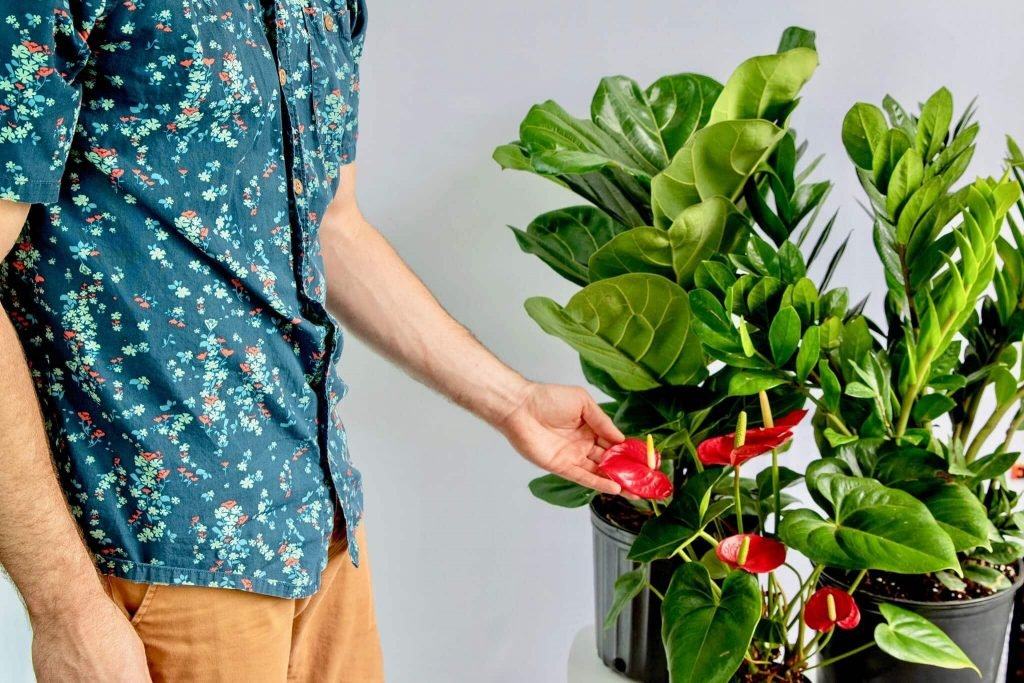 Lively Root Plant Nursery and Denver Plant Delivery Service