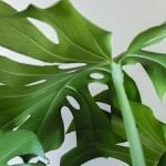 The Best London Plant Delivery Services