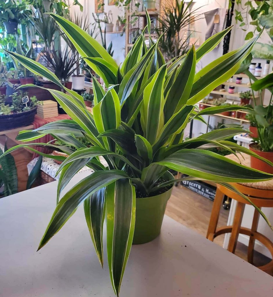 Tigerlily Goods Plant Shop in Denver Colorado
