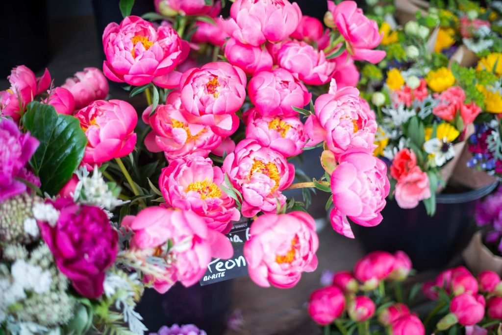 Tips to Consider When Buying Peony Flowers