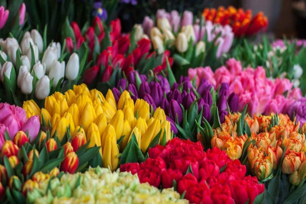Tulip Flower Symbolism