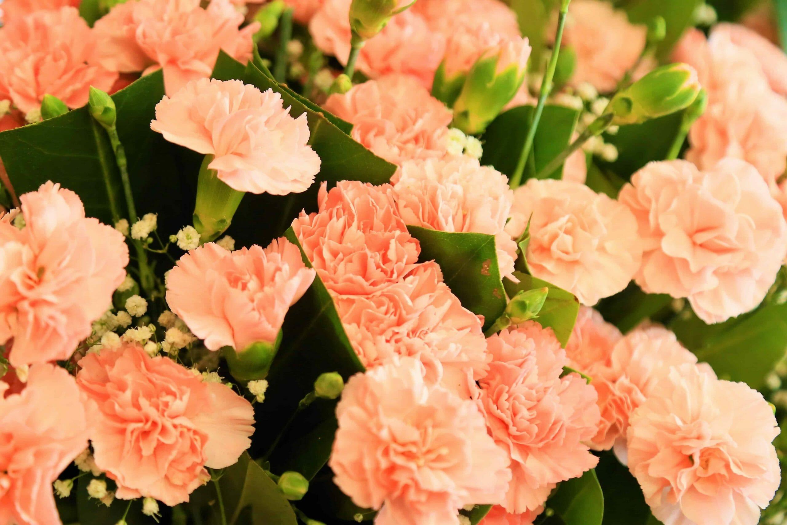 Image result for valentine orange flowers color code