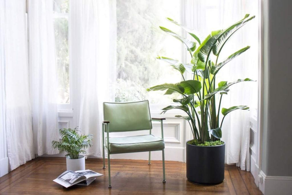 About Bird of Paradise Plants at Leon & George