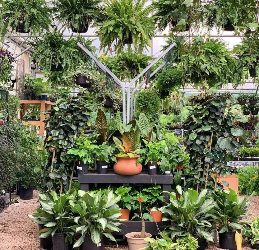 Buchanan's Native Plants Houston, Texas