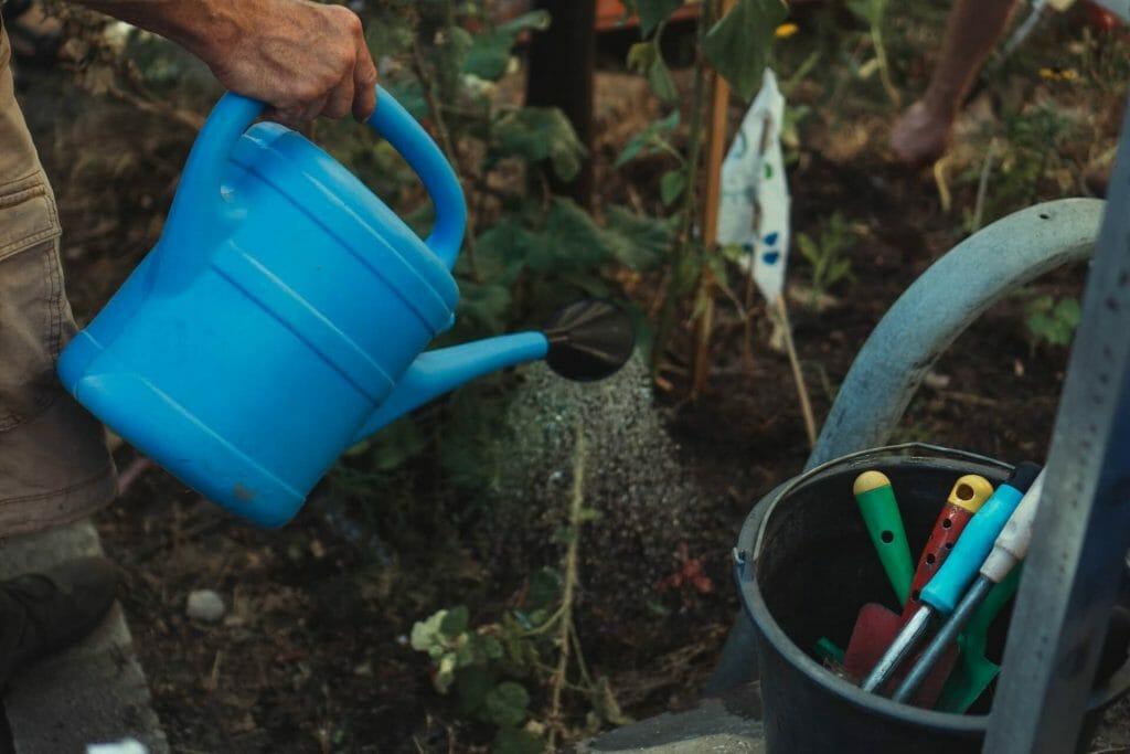Don't fertilize immediately after heavy rain