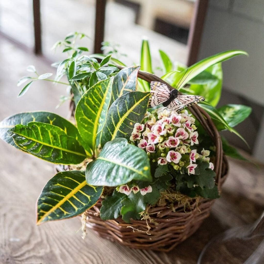 FromYouFlowers Same Day Houston Plant Delivery Service