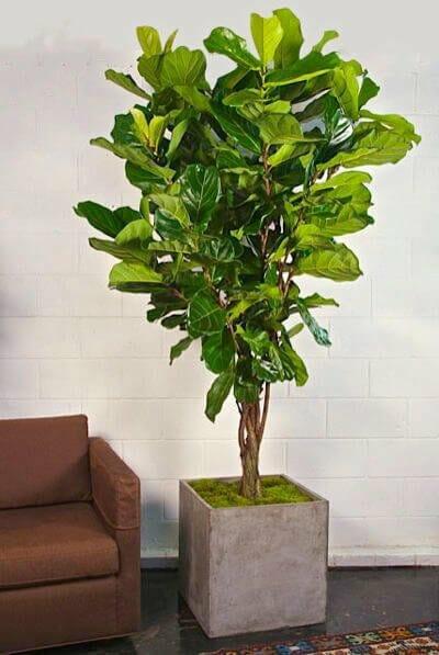 Houston Interior Plants Shop
