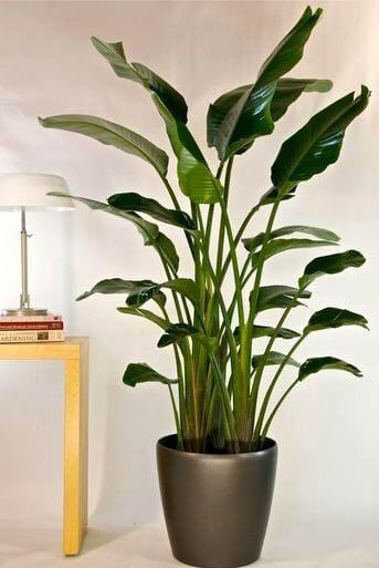Houston Interior Plants