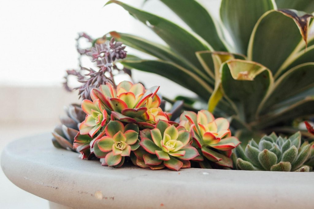 How often should I water a succulent plant