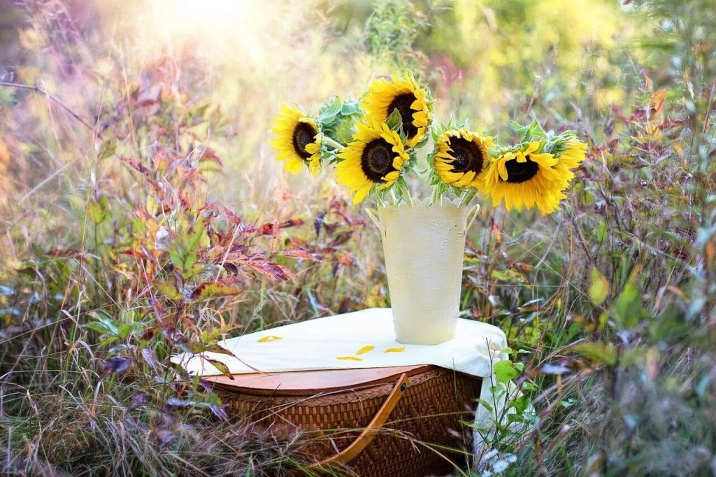 How to Care for Sunflowers