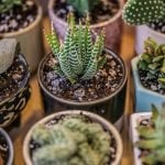 How to Water Succulents - Everything you need to know