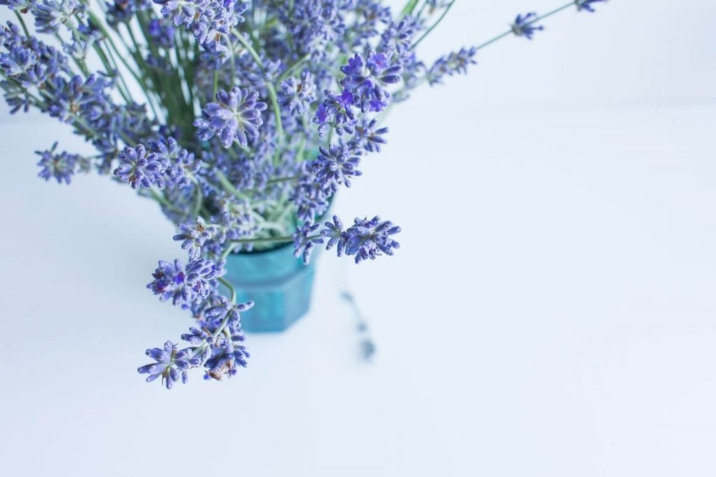 How to care for lavender flowers