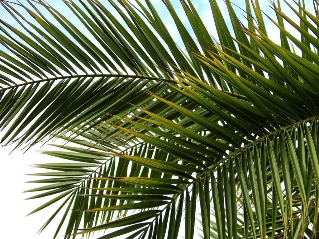 Indoor Palm Trees Common Problems