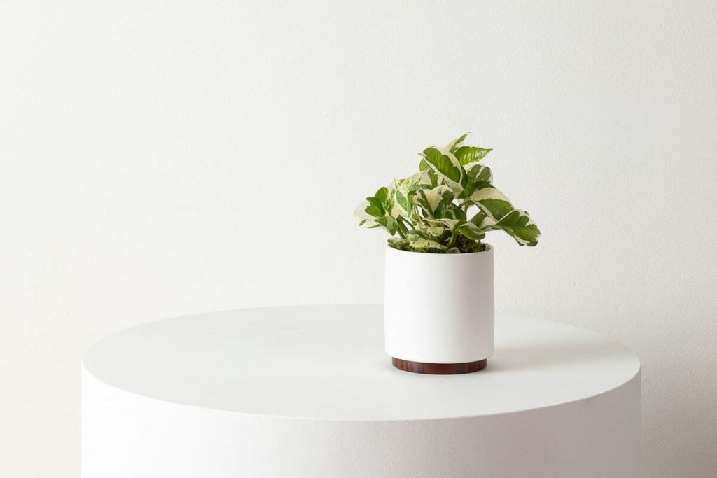 Pothos N'joy from Leon and George