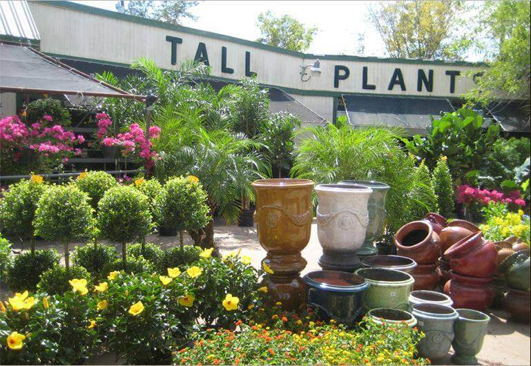 Tall Plants Garden Center in Houston, Texas