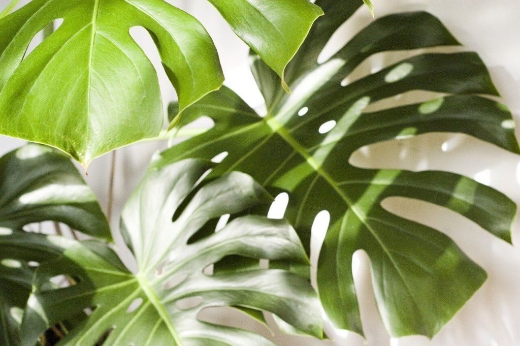 The Best Options for Plant Delivery in Houston Texas