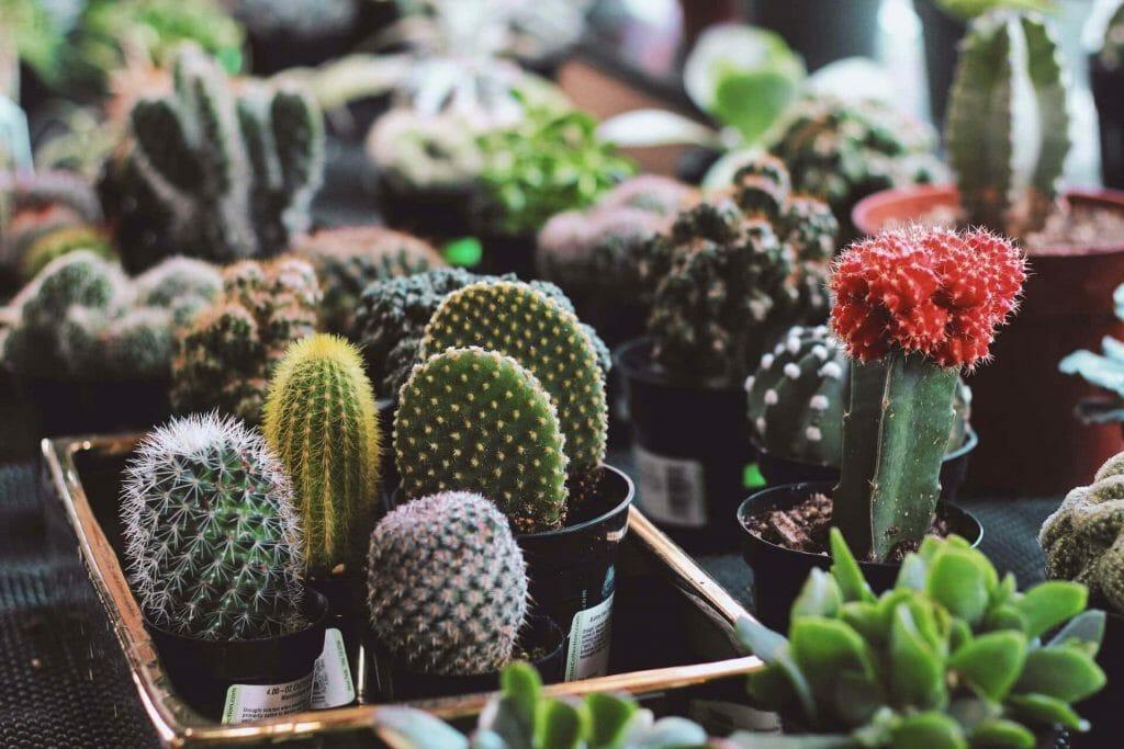 The Cactus King Garden Center in Houston, Texas