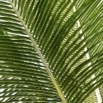 Ultimate Guide to Indoor Palm Trees