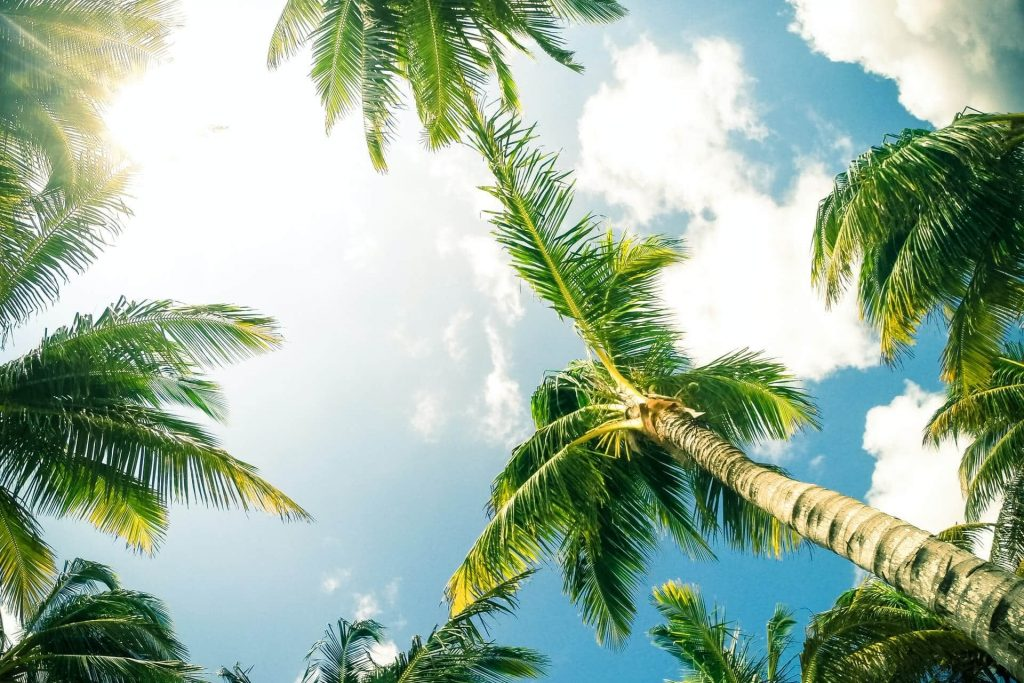 Where to find the best palm trees for sale in the USA