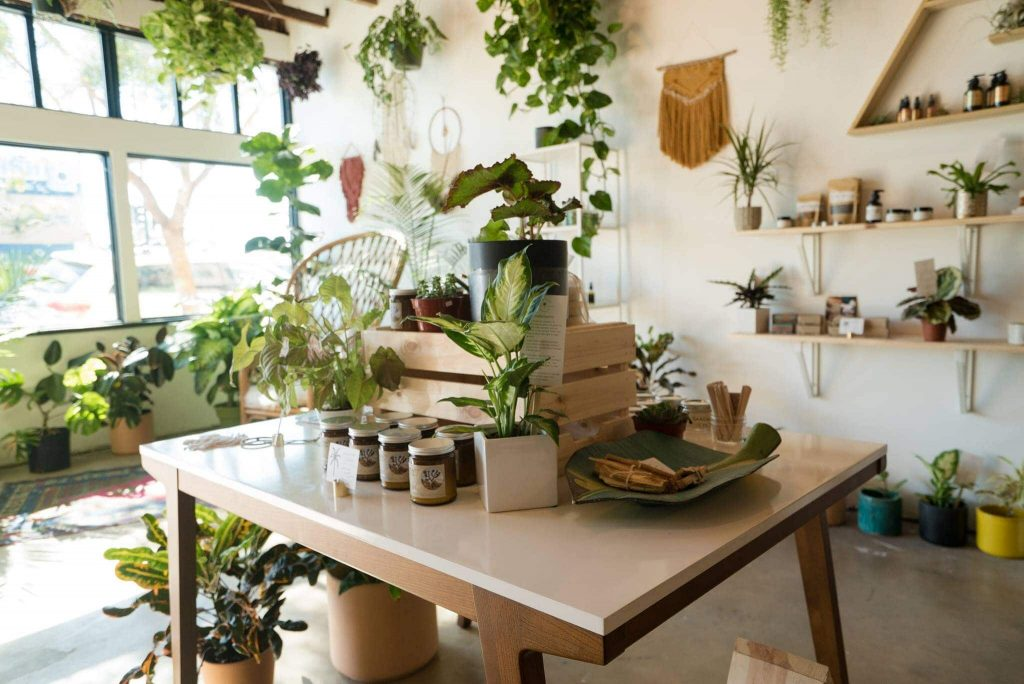 Wild Island Collective Plant Shop in San Diego, California