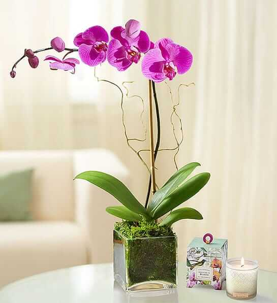 1800 Flowers Same Day Orchid Delivery