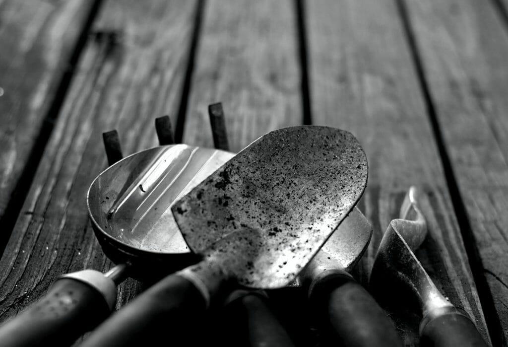 Essential Tools for Anthurium Plants