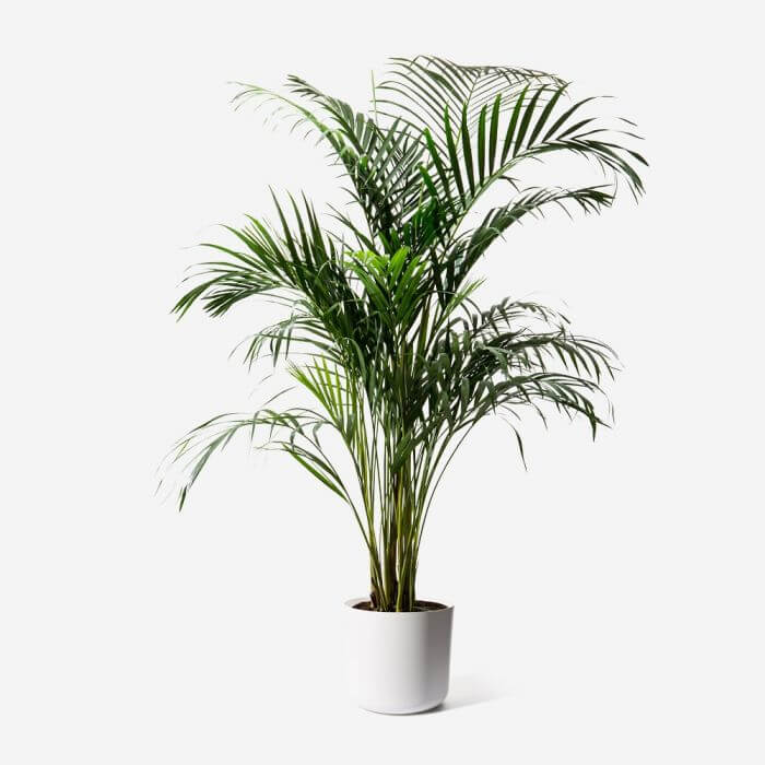 FLOWERBX Luxury Houseplants for Delivery in NYC and Los Angeles