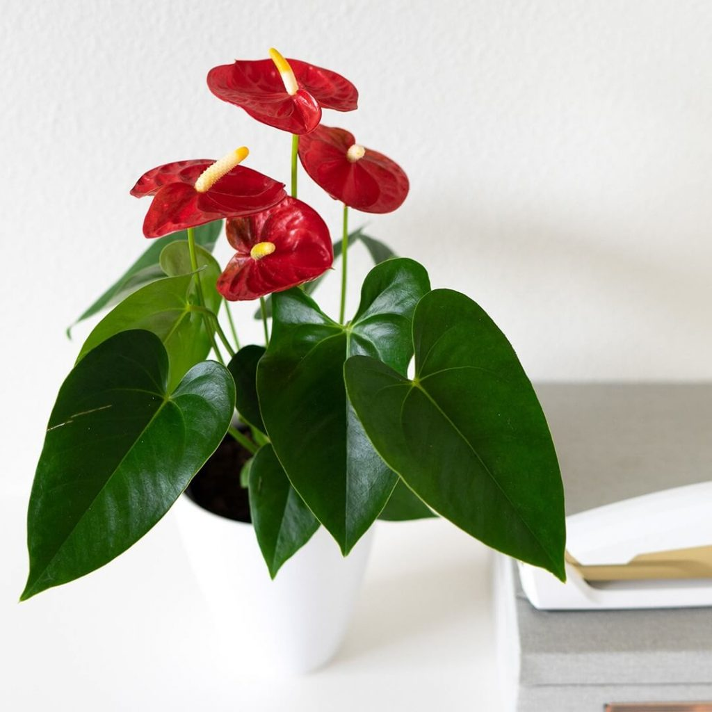 FromYouFlowers Same Day Cheap Plant Delivery in the USA