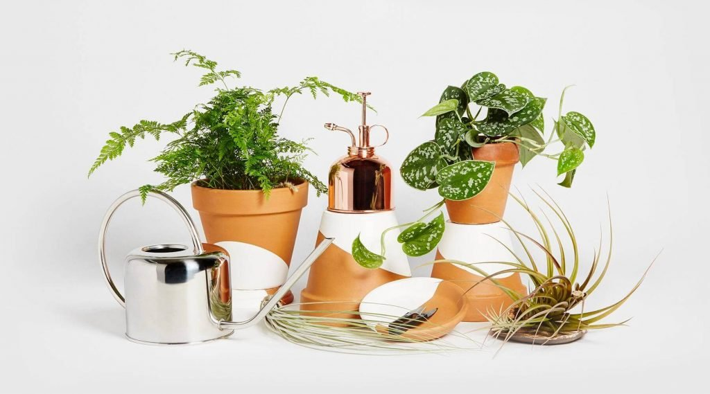 Horti Plants for Sale in the USA