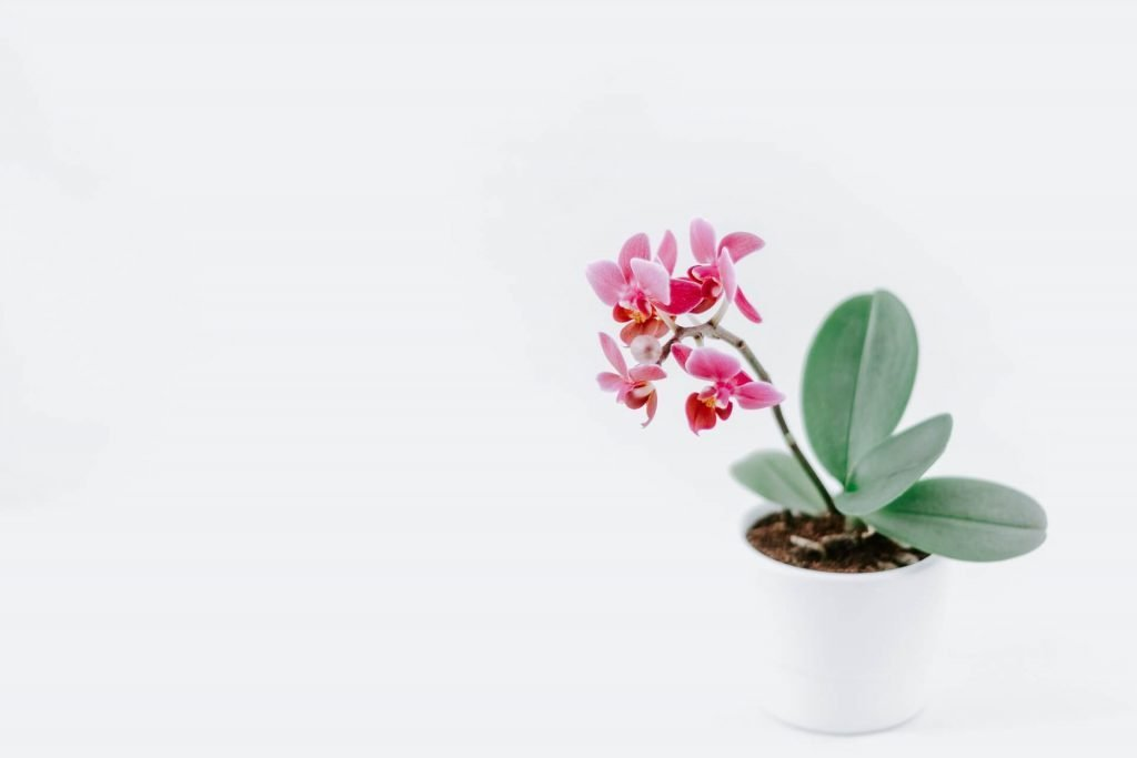 How to Water Orchids - The Potting Container Size