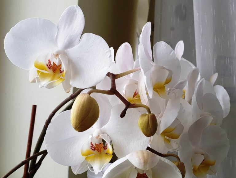How to Water Orchids - Ultimate Guide