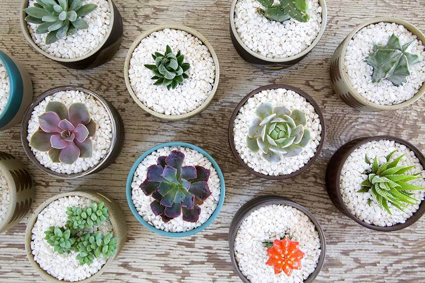 Leaf & Clay Succulent Plant Delivery in the USA