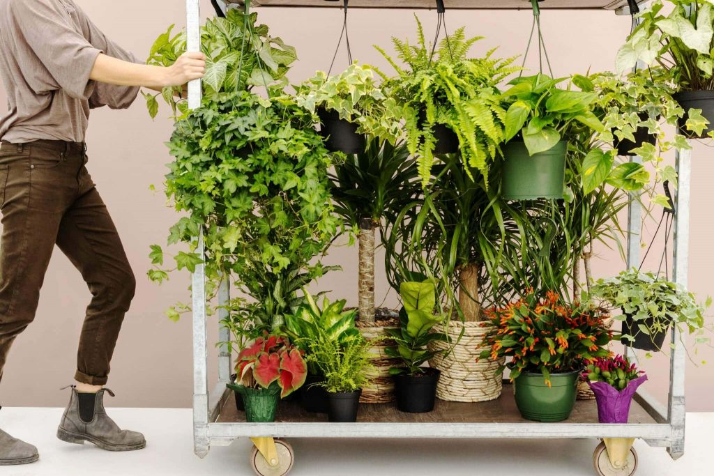 Lively Root Plant Nursery and Plant Delivery in the USA