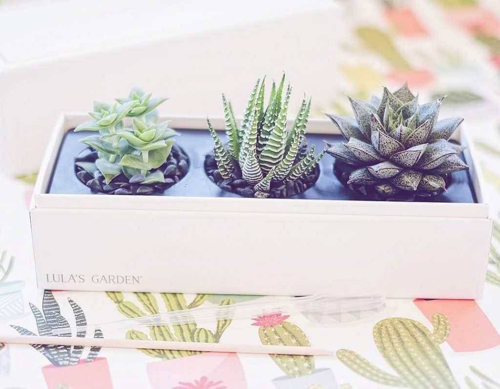 Lula's Garden Succulent Plant Gifting Delivery in the USA