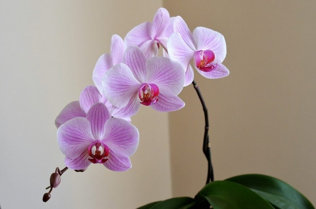 Orchid Leaves Turning Yellow - 10 Reasons and Remedies