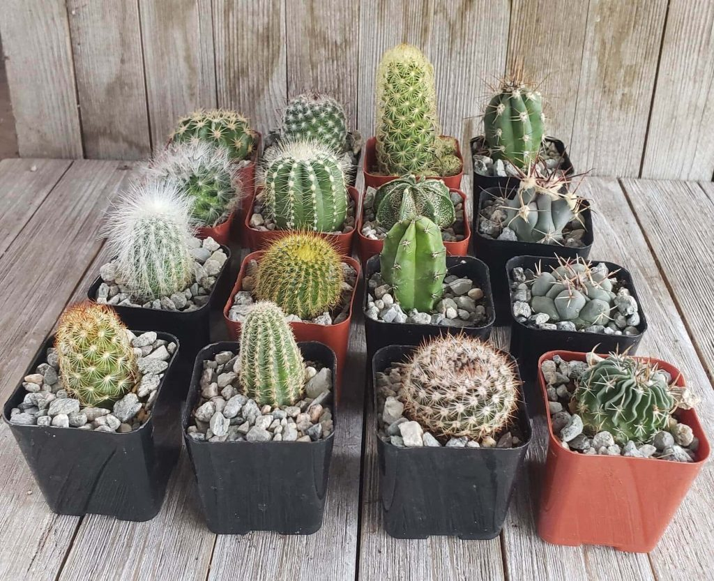 Plant Desert Cactus Plant Delivery in the USA
