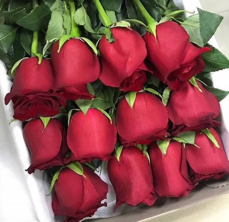 Roses Only Online Flower Delivery in the USA