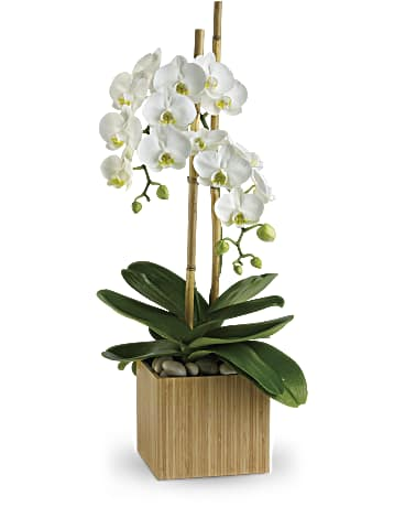 Teleflora Orchids for Sale USA