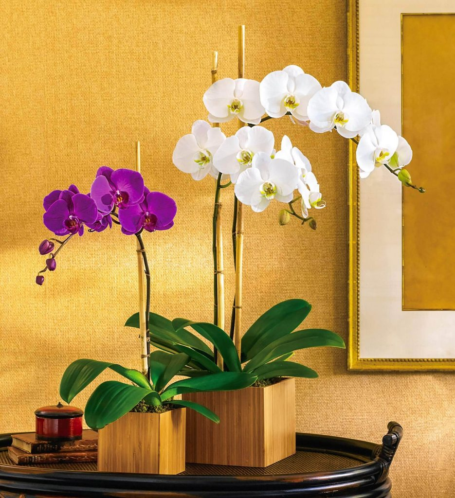 Teleflora Same Day Floweing Houseplant Delivery in the USA