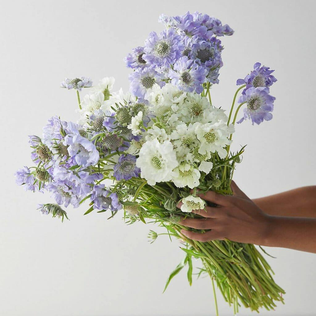 Terrain Best Flower Delivery in Charlotte North Carolina