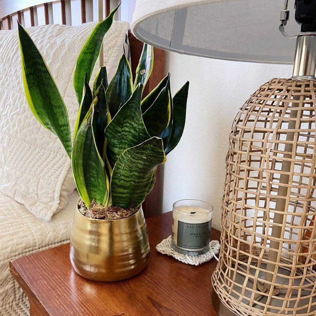 The Bouqs Houseplant Delivery in the USA