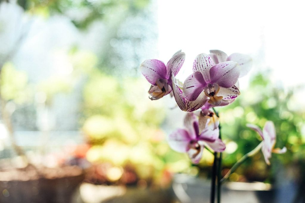 Things to Consider When Watering Orchids